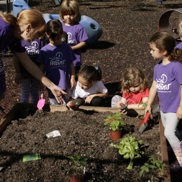 Edible Garden Planting Day49